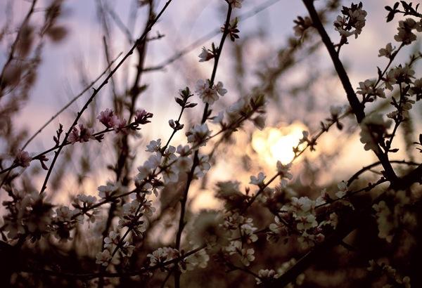 spring_sunset.jpg