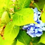 slooProImg_20120630094336